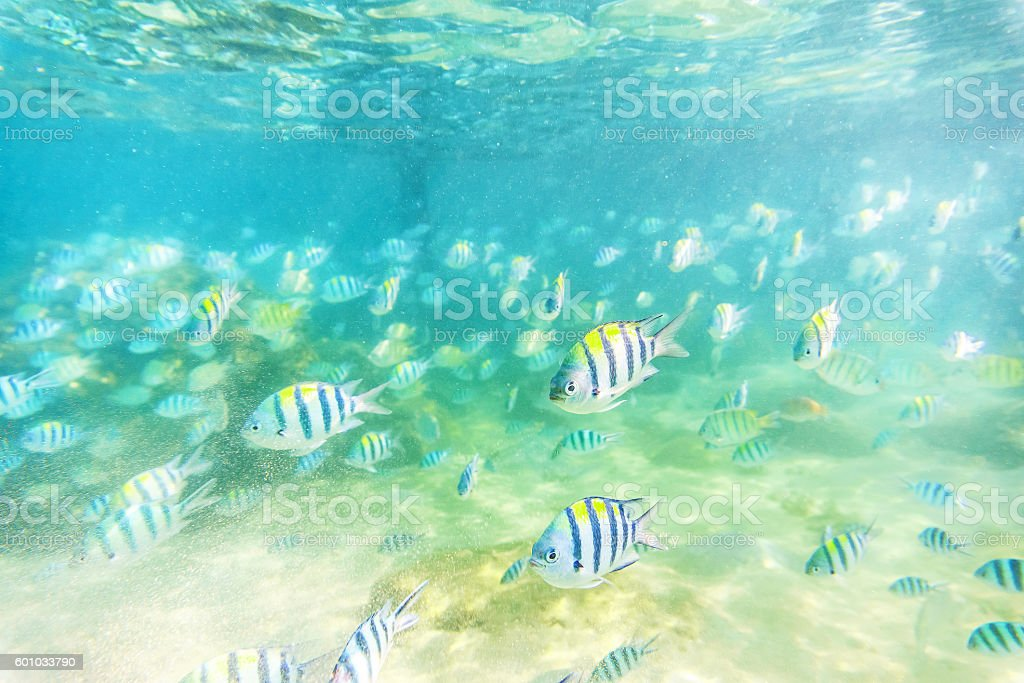 shallow Sea fish stock photo