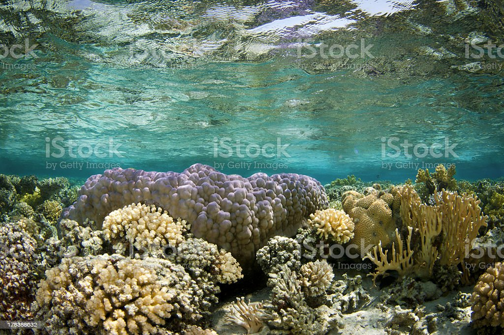 shallow underwater coral reef stock photo