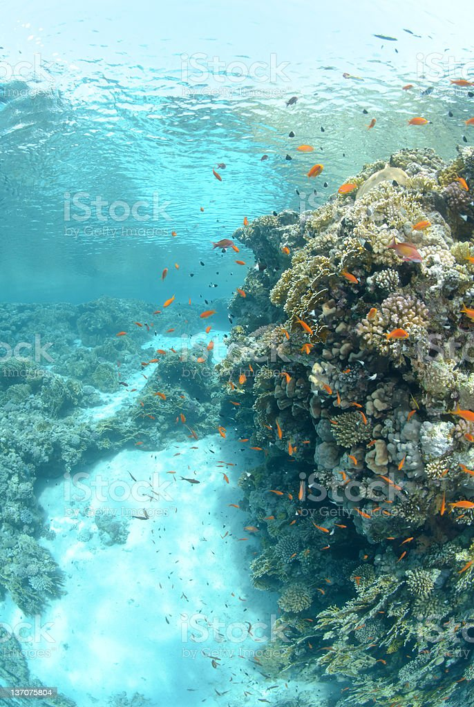 Shallows of a tropical sea royalty-free stock photo