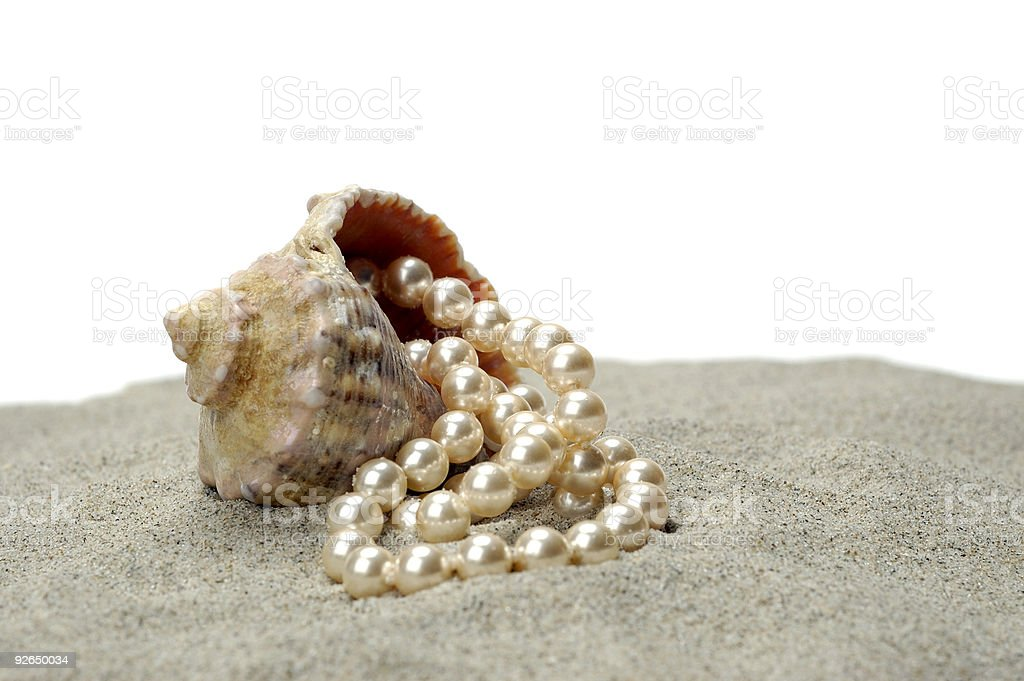 Shallow-water snail with pearls royalty-free stock photo