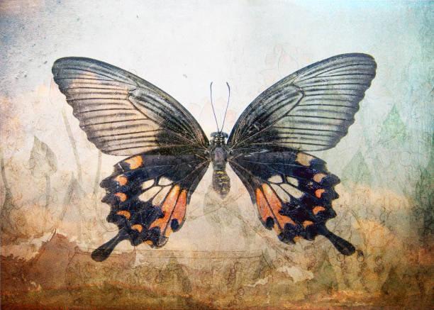 Shaman magic butterfly picture id1269443916?b=1&k=6&m=1269443916&s=612x612&w=0&h=p4olclmxpsfuyj yj2n67nk7 hrwd4qw4l bvuznn2k=
