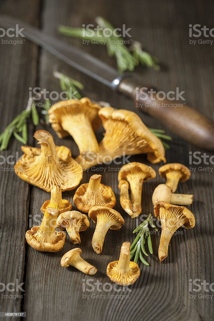 Shanterelle mushrooms stock photo