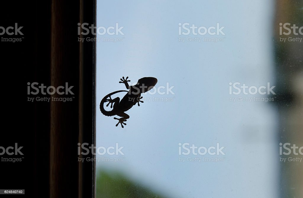 Shape of a small gecko stock photo