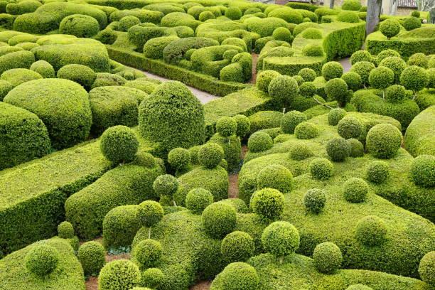 jardin de buis en forme - buis photos et images de collection