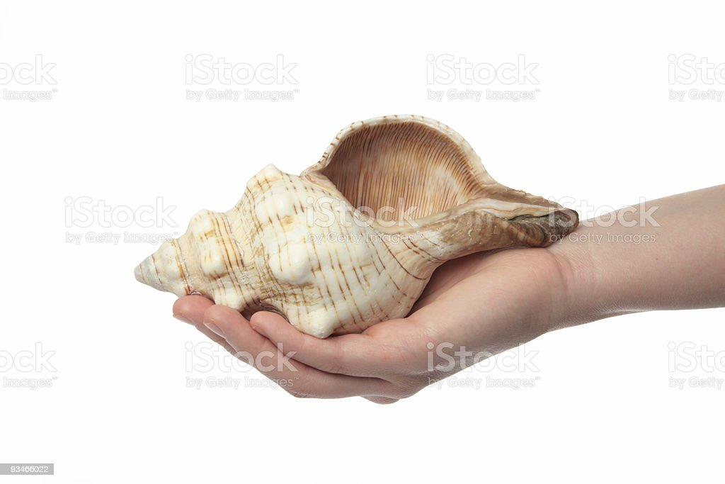 Share a shell royalty-free stock photo
