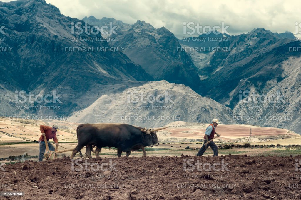Sharecroppers plowing a field for potatoes - foto de stock