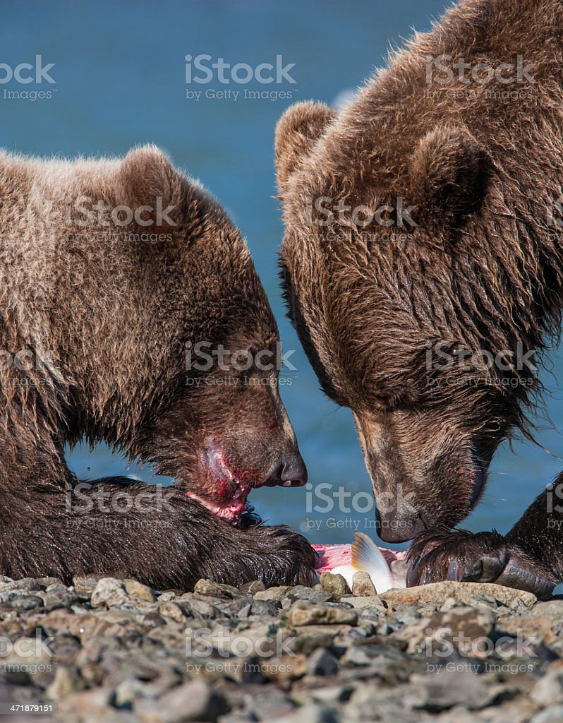 Sharing a Meal royalty-free stock photo