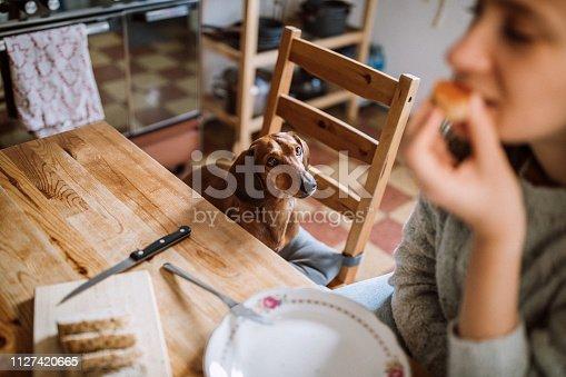 Charming Brunette Woman Enjoying Her Breakfast In Company Of Dachshund Dog