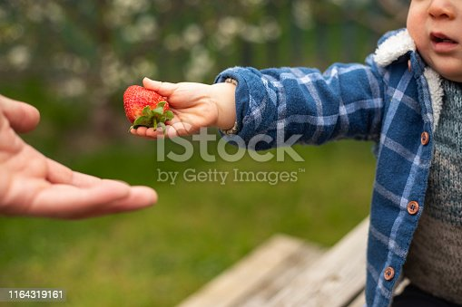 Selective view of a baby boys hand holding out a strawberry as he is sharing his food.