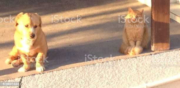Sharing the scene mismatch picture id825691434?b=1&k=6&m=825691434&s=612x612&h=q6mzlypuhnqq4fbnl1mbmoifya25fm5tlzza17b1sbc=