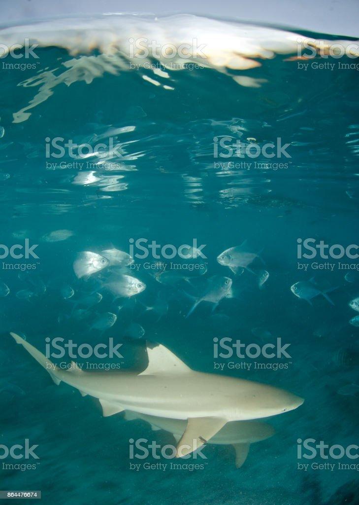 shark and fish stock photo