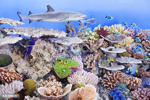 istock shark and fish with dummy corals 530985051