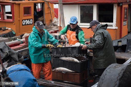 Mar del Plata, Argentina - September 19 2016: It is a small fishing boat, typical of the port of Mar del Plata, returning from a day of fishing, usually depart at dawn and return at sunset. They had a very good day of fishing, mainly of sharks.