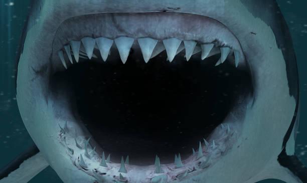 shark attack - squalo foto e immagini stock