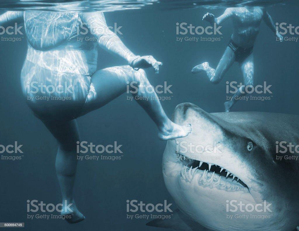 Shark attack. stock photo