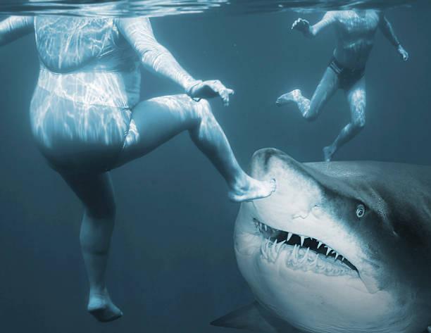 attaque de requin. - dents des animaux photos et images de collection