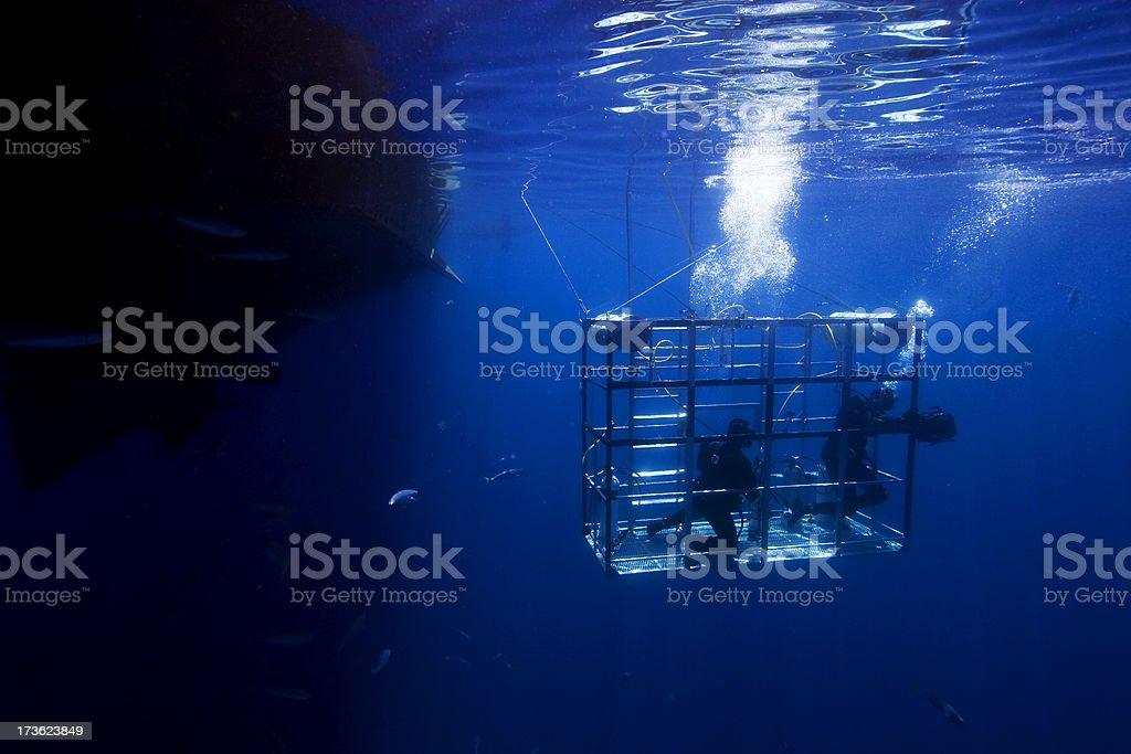 Shark Cage stock photo