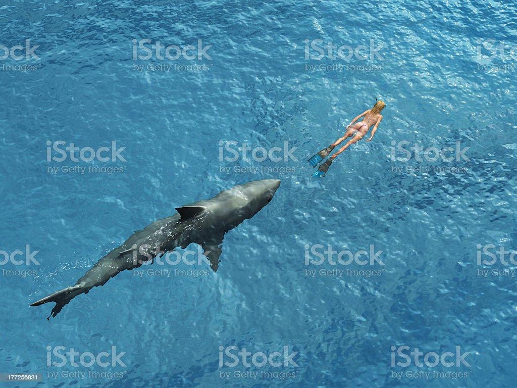 Shark diver pursues royalty-free stock photo
