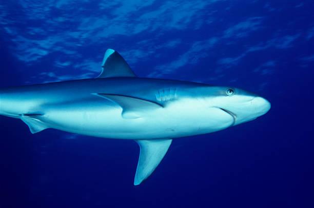 Begegnung mit Hai – Foto