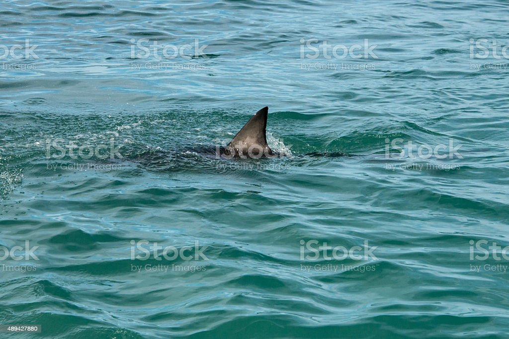 Shark fin stock photo