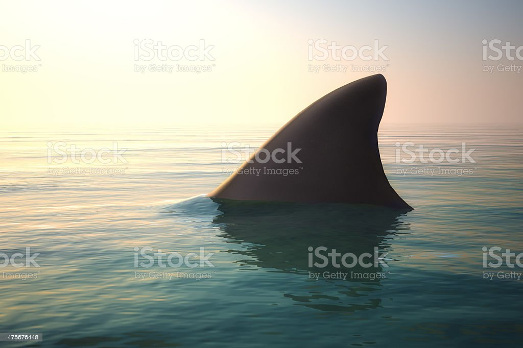 Shark fin above ocean water stock photo