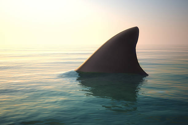 pinne di squalo sopra oceano - squalo foto e immagini stock