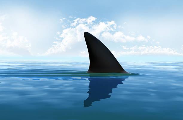 Shark fin above water. XXXL size stock photo