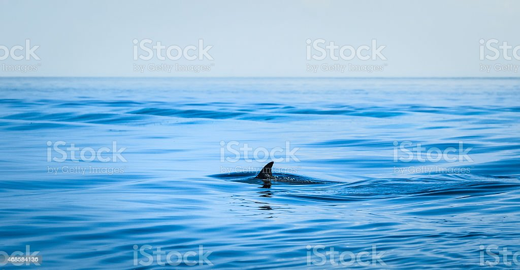 A shark fin in the middle of the vast ocean waters stock photo