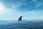 shark fin on surface of ocean agains blue cloudy sky.