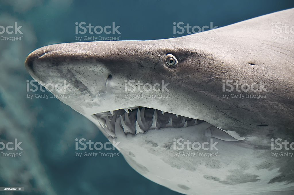 Shark fish stock photo