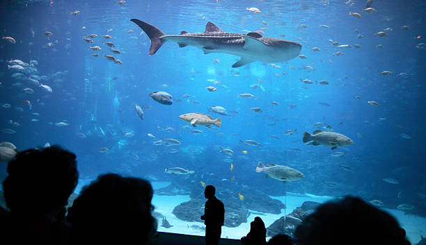 shark in Atlanta's aquarium stock photo