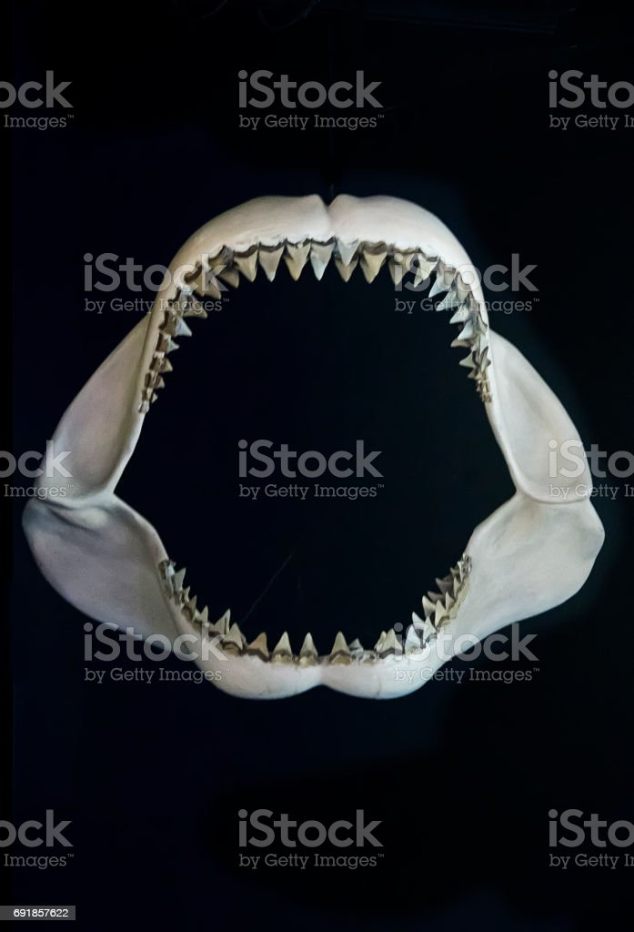 Shark jaw stock photo