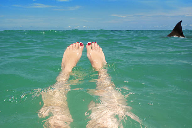 Shark Lurking Around Woman Floating In Ocean A woman's legs floating in the beautiful clear water of the ocean as a shark fin peeks up from the waters ahead or her. diving flipper stock pictures, royalty-free photos & images