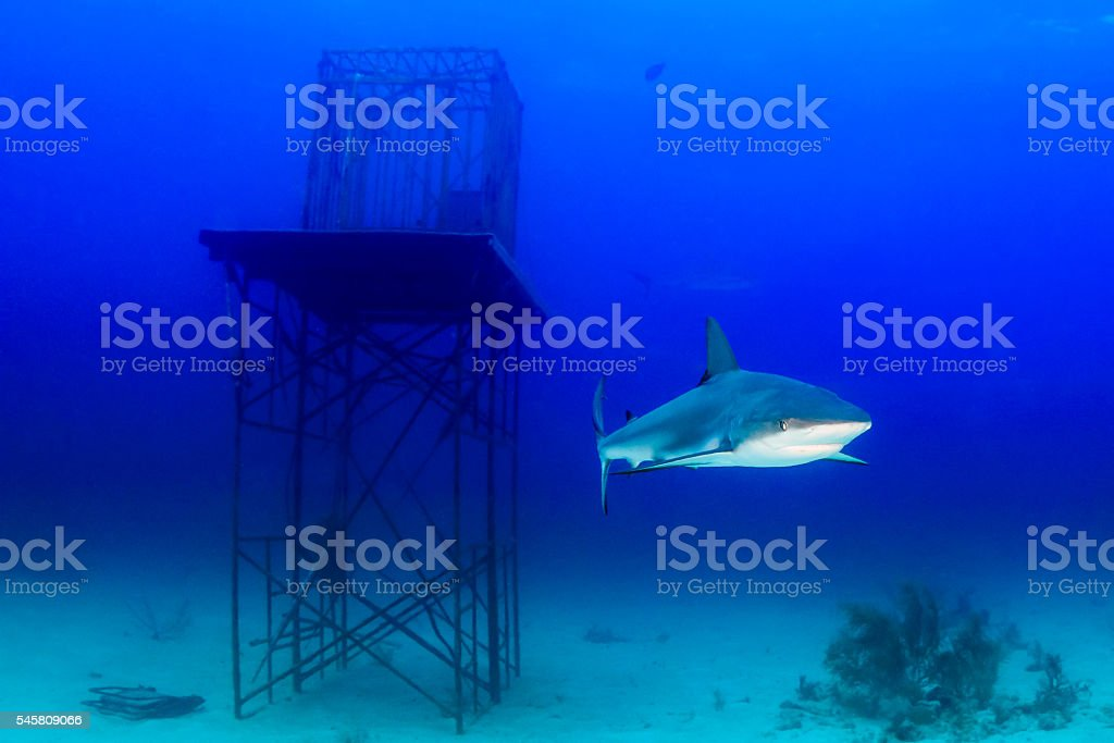 Shark over a reef stock photo
