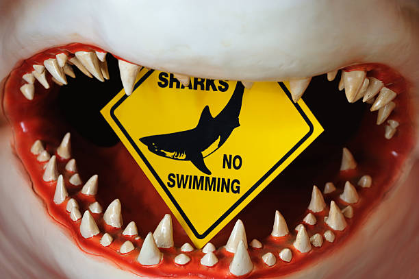 Shark  deathly stock pictures, royalty-free photos & images