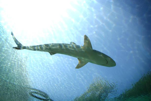 Shark! stock photo