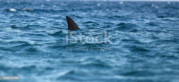 dorsal fin of shark in sea