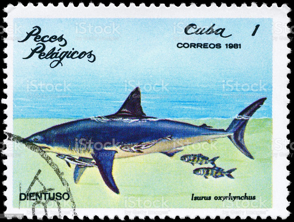 Tiburón - Stock Foto e Imagen de Stock | iStock