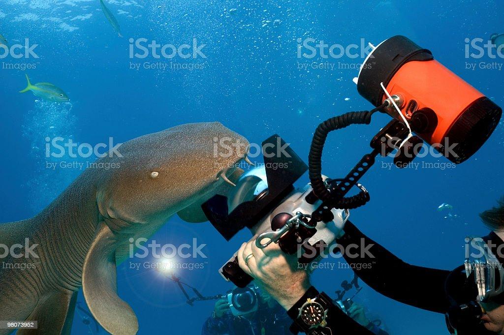Shark Shootout royalty-free stock photo