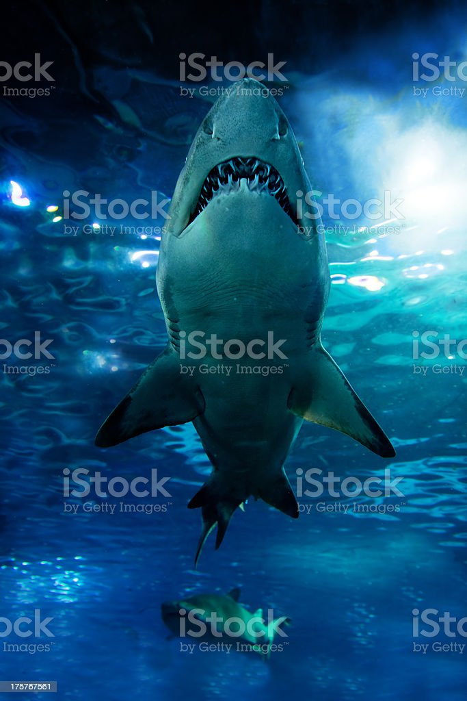 Shark silhouette underwater stock photo