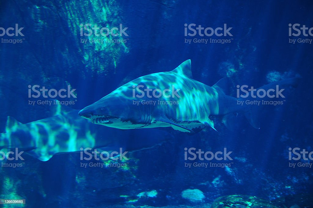 shark spotting #3 royalty-free stock photo