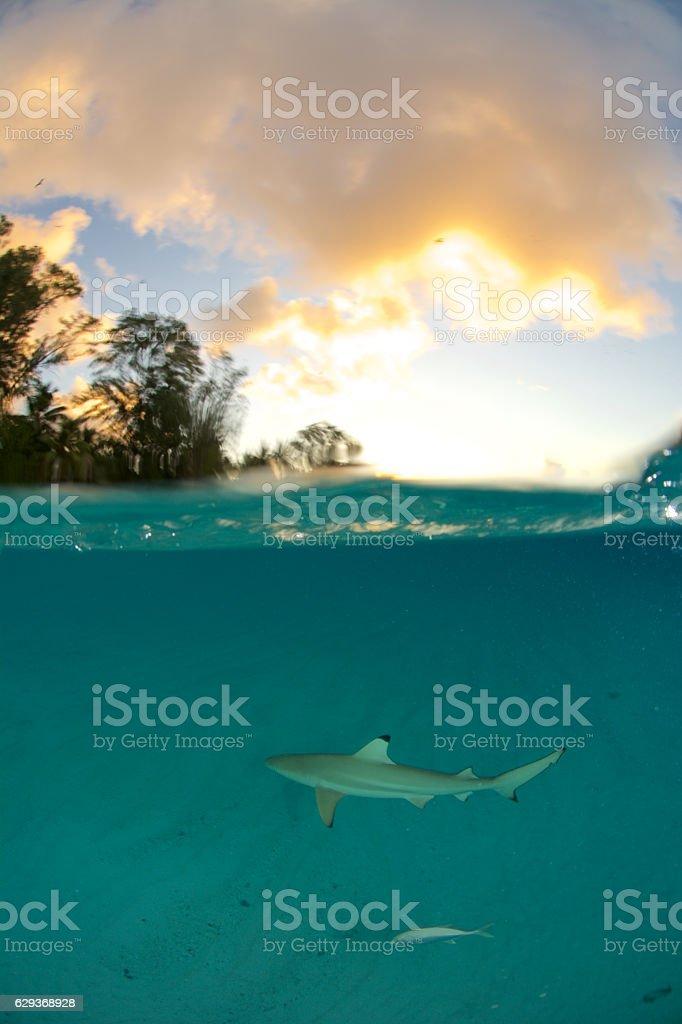 shark sunset stock photo
