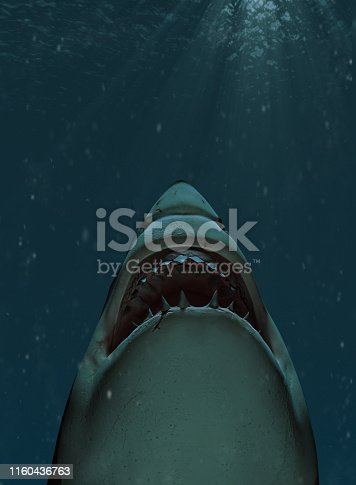 Shark swimming towards the surface with mouth open
