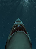 Cartoon Shark Character Vector Illustration