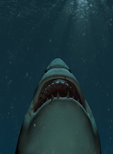 shark swimming towards the surface with mouth open - squalo foto e immagini stock