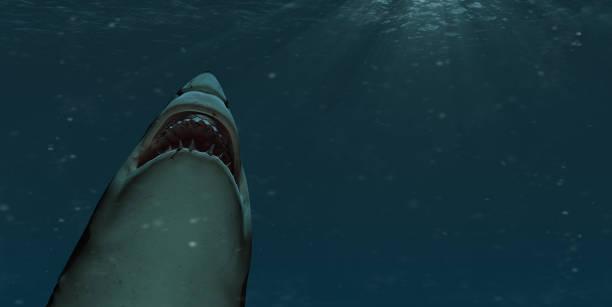 Hai schwimmt mit offenem Mund an die Oberfläche – Foto