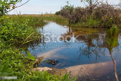 Landscape view of the Shark Valley Trail during the day in Everglades National Park (Florida).