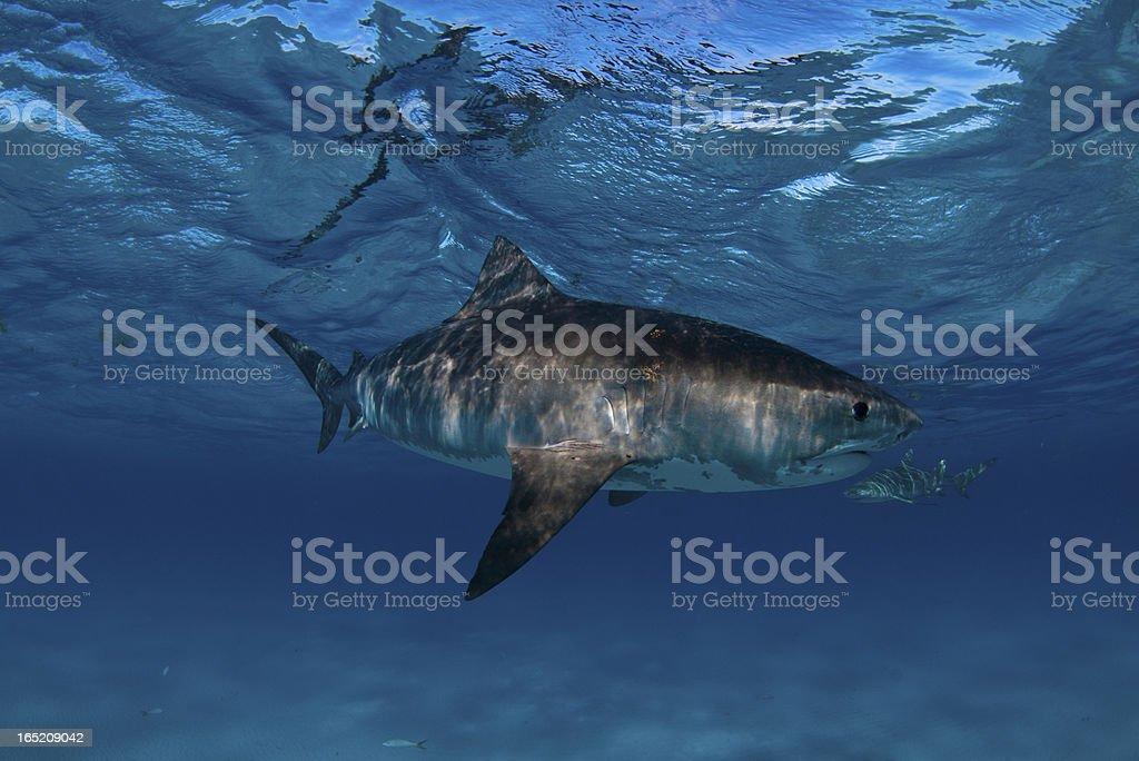 Shark visit stock photo
