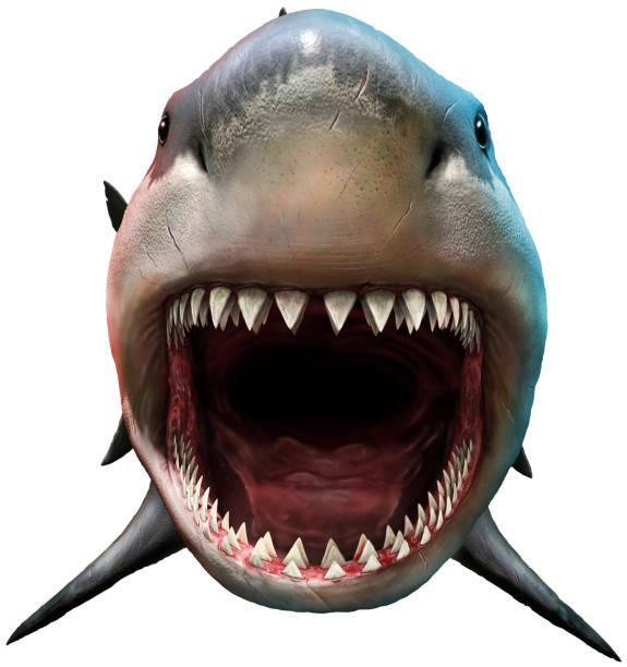 shark with open mouth - squalo foto e immagini stock
