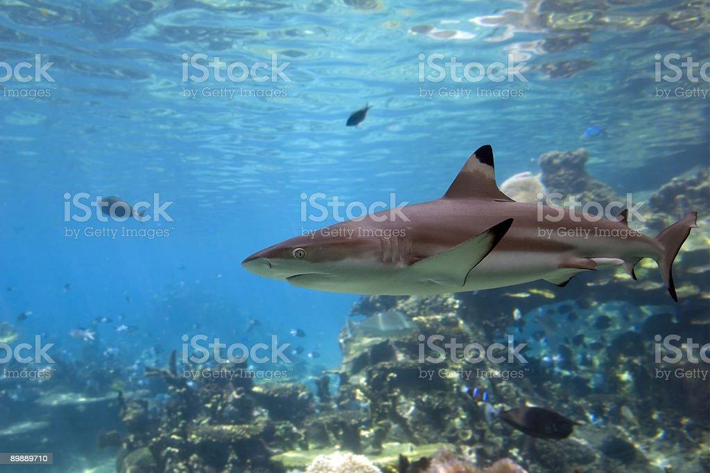 Shark1 stock photo